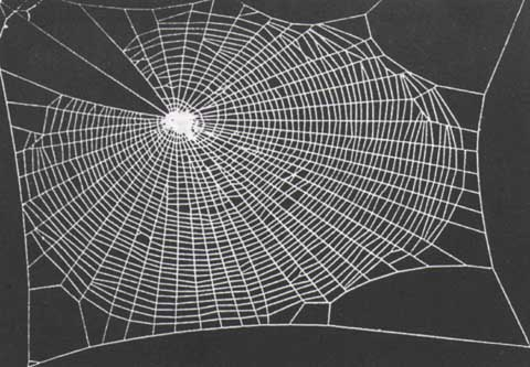 a drug-free spider's web