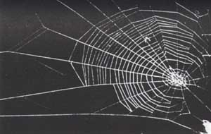 hashish spider's web